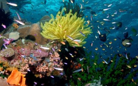 Push the marine network boundaries